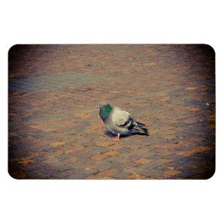 Pigeon Rectangular Magnet