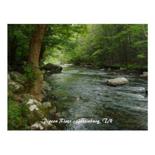 Pigeon River - Gatlinburg, TN Post Cards