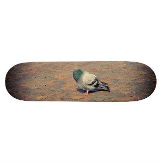 Pigeon Custom Skateboard