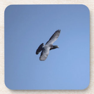 Pigeon Soaring In the Sky Coaster