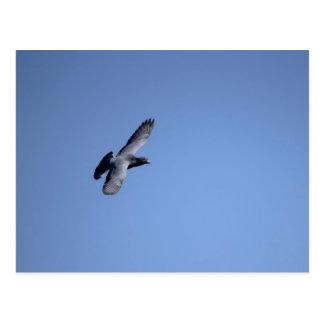 Pigeon Soaring in the Sky Postcard