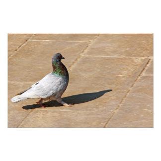 Pigeon Stationery
