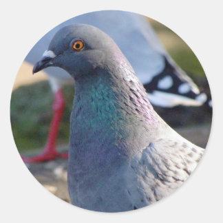Pigeon Stickers