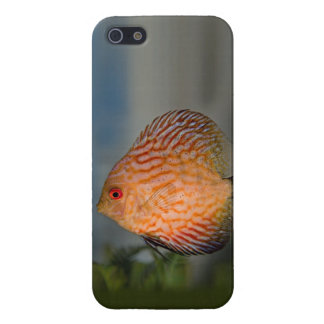 Pigeon Stone Discus iPhone 4 Speck Case