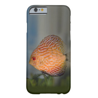 Pigeon Stone Discus iPhone 6 Case
