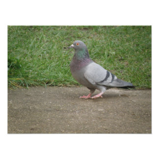 Pigeon Toed Poster