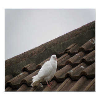 Pigeons 36 posters