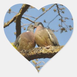 pigeons adesivo