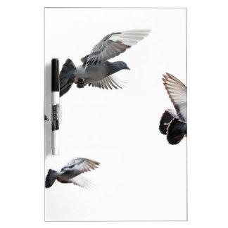 Pigeons Birds Sky Nature Peace Love Destiny Dry-Erase Boards