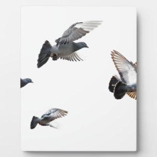 Pigeons Birds Sky Nature Peace Love Destiny Display Plaques