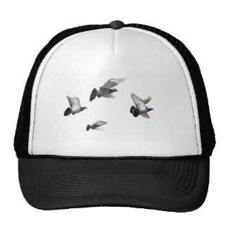 Pigeons Birds Sky Nature Peace Love Destiny Trucker Hat
