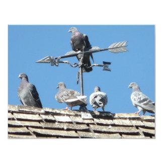 pigeons card