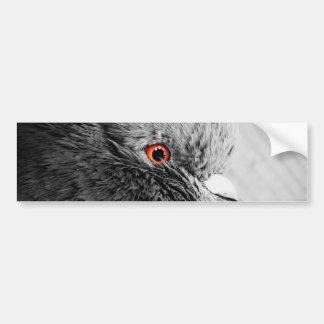 Pigeon's Eyes Bumper Sticker
