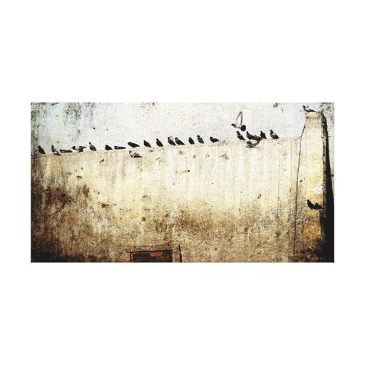 Pigeons Gallery Wrapped Canvas