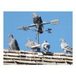 pigeons invitation