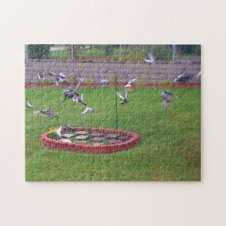 Pigeons Landing Taking Off Birds Feeder Puzzle