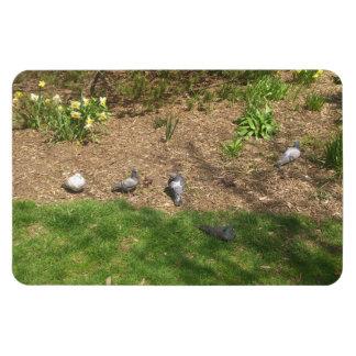 Pigeons Magnet