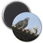 Pigeons on the roof. 2 inch round magnet