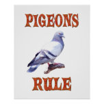 Pigeons Rule Poster