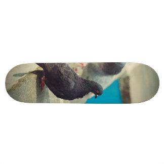 Pigeons Skate Decks