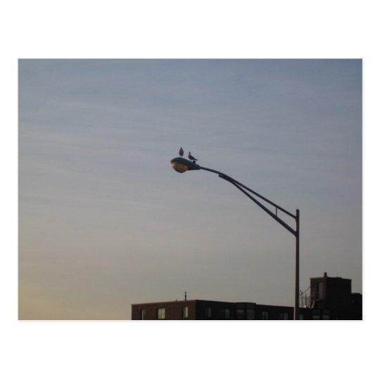 pigeons watching sunrise postcard