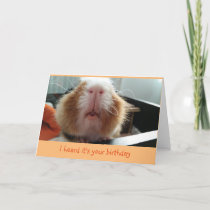 Piggie kisses and curly whiskers birthday card