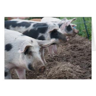 Piggie Siblings Card