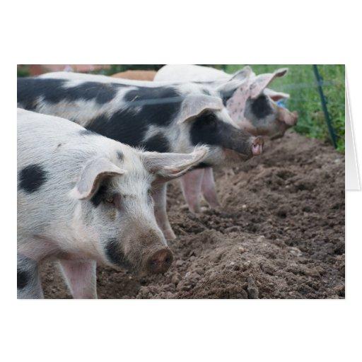 Piggie Siblings Greeting Card