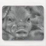 Piggie Tapetes De Ratones