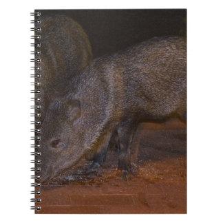 Piggies de Javalina Libro De Apuntes Con Espiral