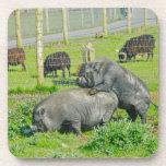 Piggy Back Ride Coaster