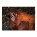 Piggy Back Ride from Orangutan Mother in Borneo Cards