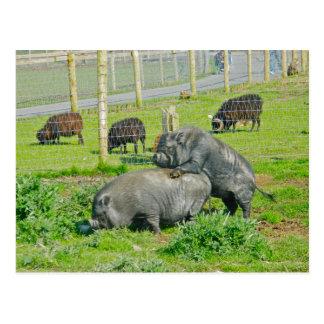 Piggy Back Ride Post Card