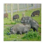 Piggy Back Ride Tile