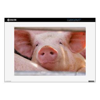 Piggy Laptop Skins