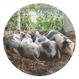 Piggy Pile Dinner Plate