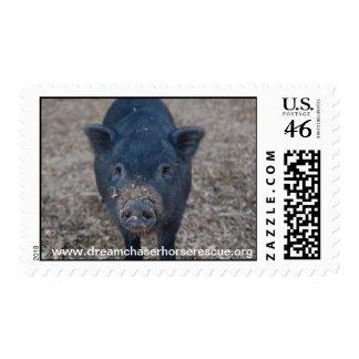 Piggy Postage Stamps