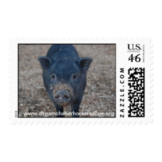 Piggy Postage Stamps
