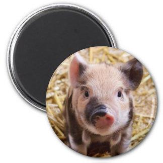Piglet 2 Inch Round Magnet