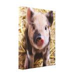 Piglet Gallery Wrap Canvas