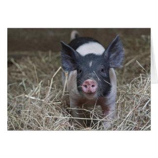 Piglet in straw card