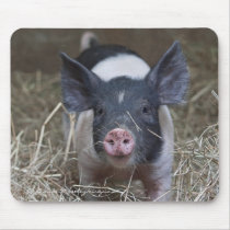 Piglet in Straw Mouse Pad