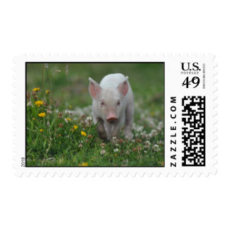 Piglet in Wildflower Meadow Postage Stamps