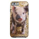 Piglet iPhone 6 Case