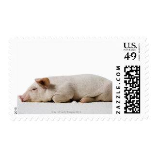 Piglet Lying Down Profile Postage