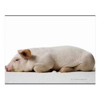 Piglet Lying Down Profile Postcard
