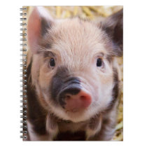 Piglet Notebook