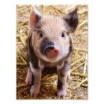 Piglet Photo Print