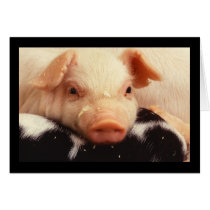 Piglet Pig Adorable Face Snout