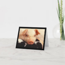 Piglet Pig Adorable Face Snout Card